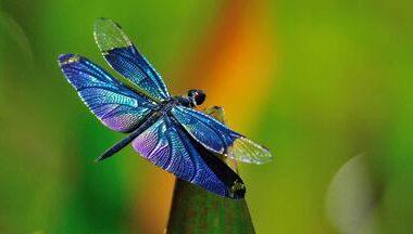 Super Dragonfly