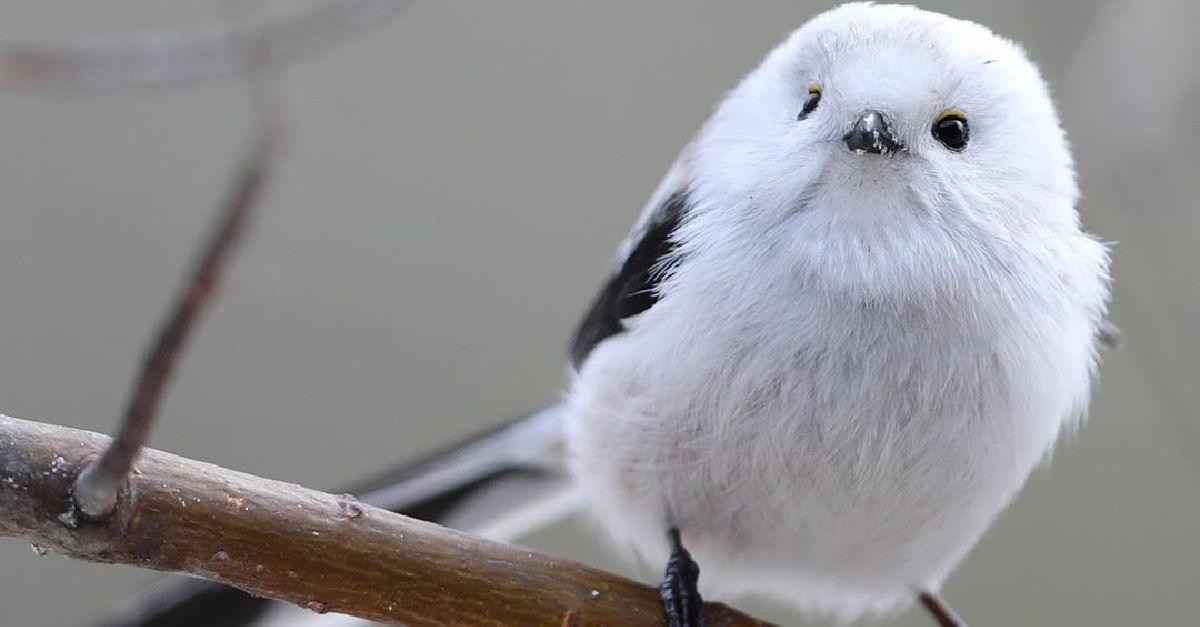 Top Japanese Bird