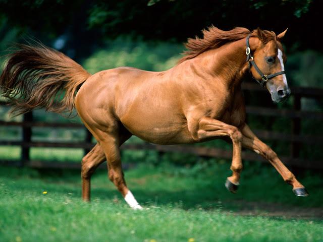 Top Running Horse