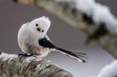 Widescreen Japanese Bird