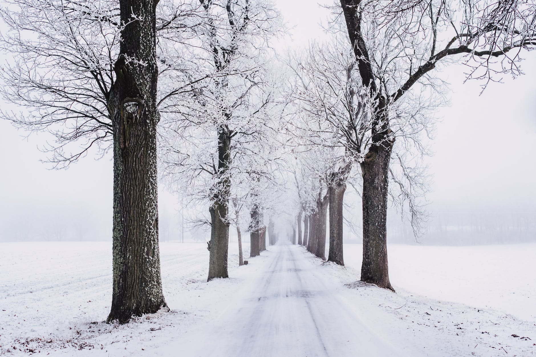 Awesome Winter Wallpaper