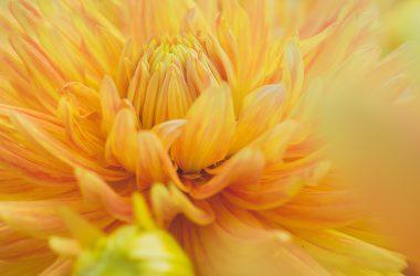 Cool Flower Macro
