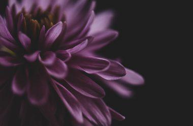 Free Flower Macro