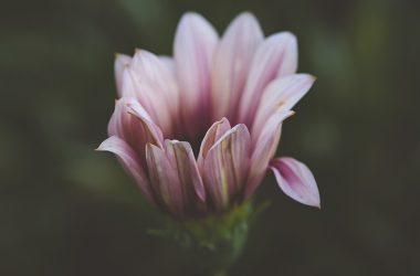 Natural Flower Macro