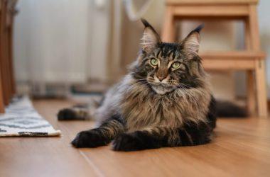 Top Fluffy Cat