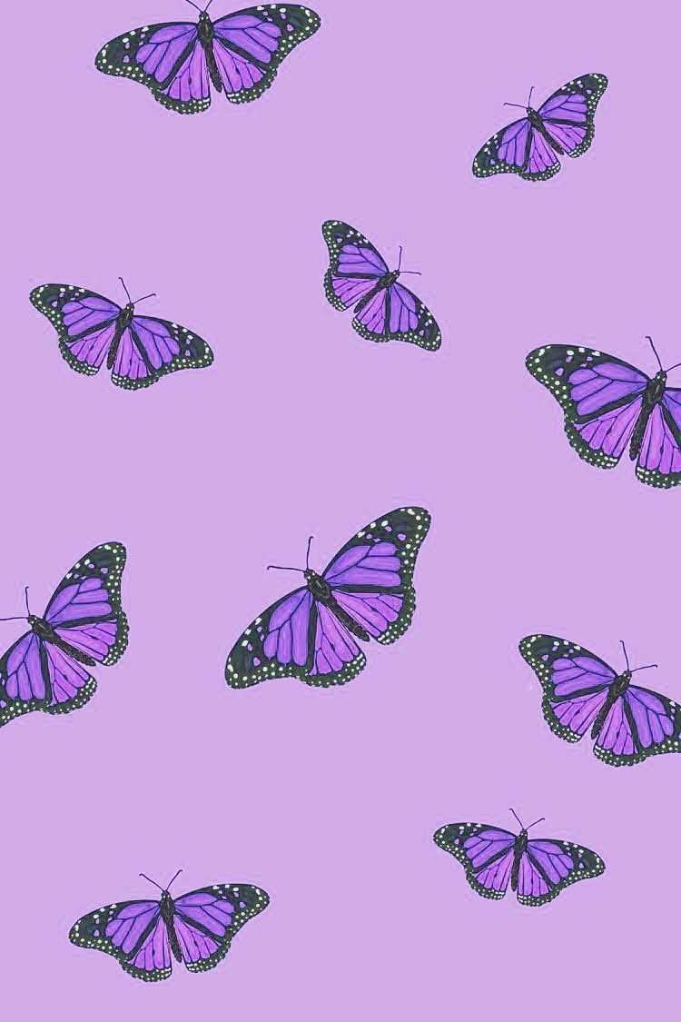 Widescreen Violet Wallpaper