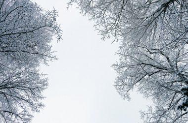 Widescreen Winter Wallpaper